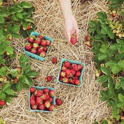 イスラエルでオーガニック野菜と果物を育てるオーガニックファームをご紹介!
