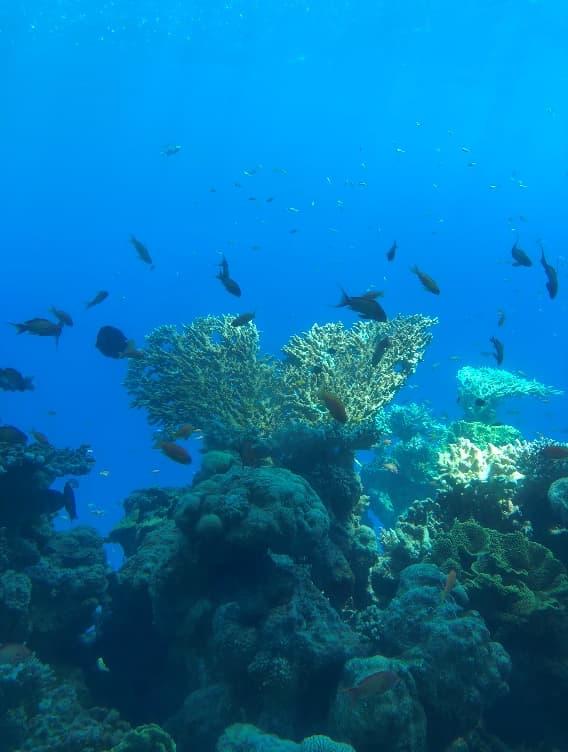 水中展望台から見えるサンゴ礁と熱帯魚