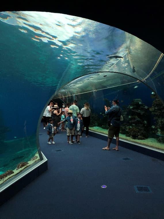 サメの水槽、水中トンネルをくぐれば海中に居るかの感覚に