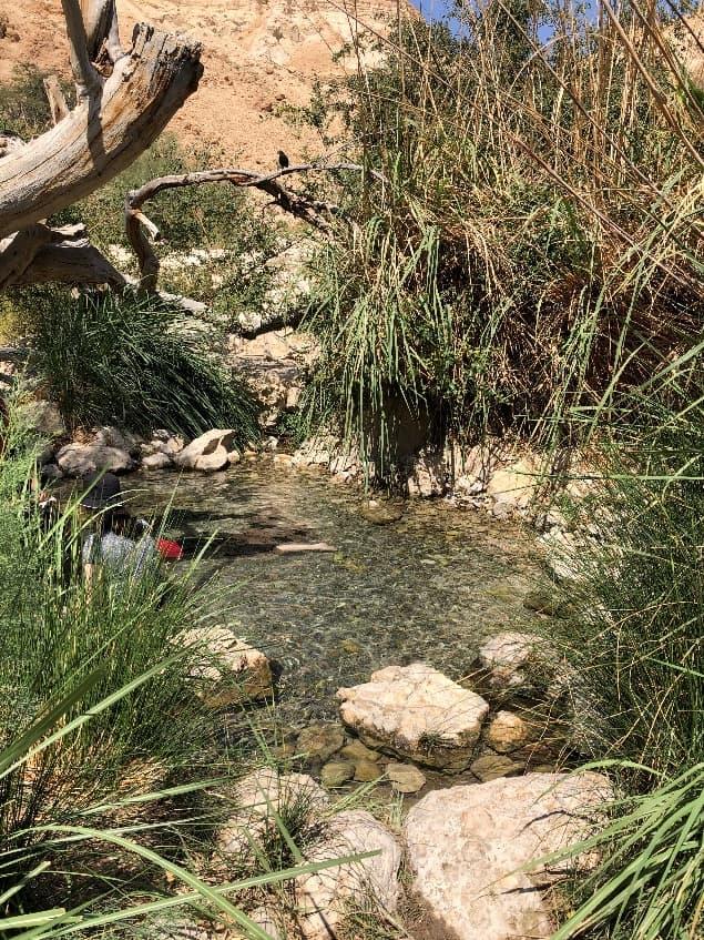 エン・ゲディの泉