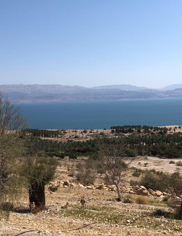 ゴレンの丘から死海を眺めながら下山