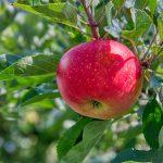 日本の農家がイスラエルの農業技術を選ぶ理由とは?