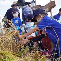 スマート農業で東北支援。イスラエル発点滴灌水システムを用いて育てた新米収穫イベント開催